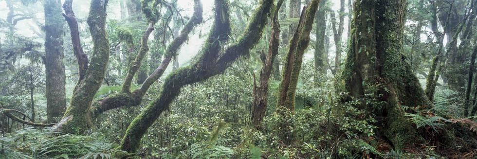 TIKITU - Regenwald