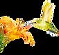 DHM_Kolibri_sh_111328400_RZ-1-300x282.pn