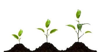 plants%20growing_edited.jpg