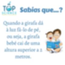 Cópia_de_Cópia_de_Cópia_de_Cópia_de_Cópi