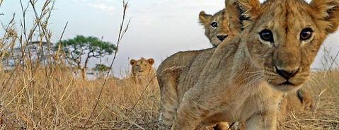 Serengeti-Discovery-p.jpg