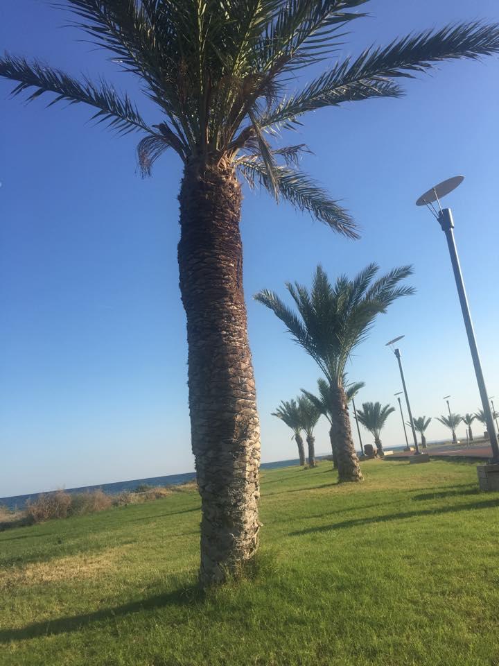 Искеле-пляж-Лонг бич-пальмы