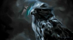 Hawk in Grey