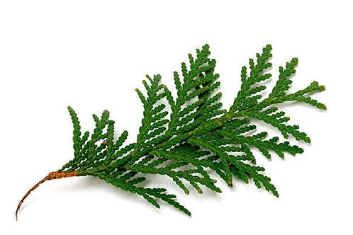 Huile essentielle Cèdre feuilles
