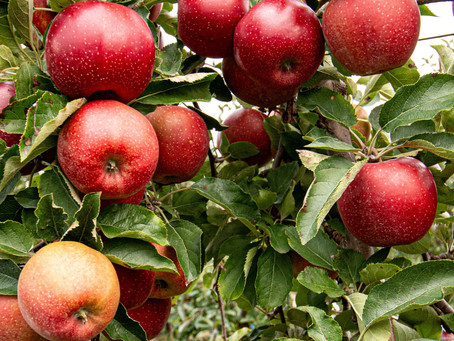 How to Eat Autumn Apples - Three Exciting Ways