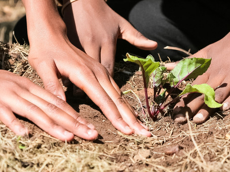 Become a Sustainable Eater - By Going Local & Seasonal