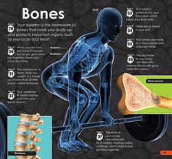 SDB Human Body 12-13