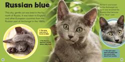 4 MLBO Cats - new pics