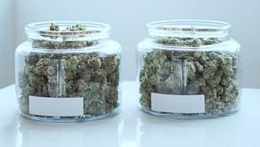 What's the difference between medical marijuana and recreational marijuana?