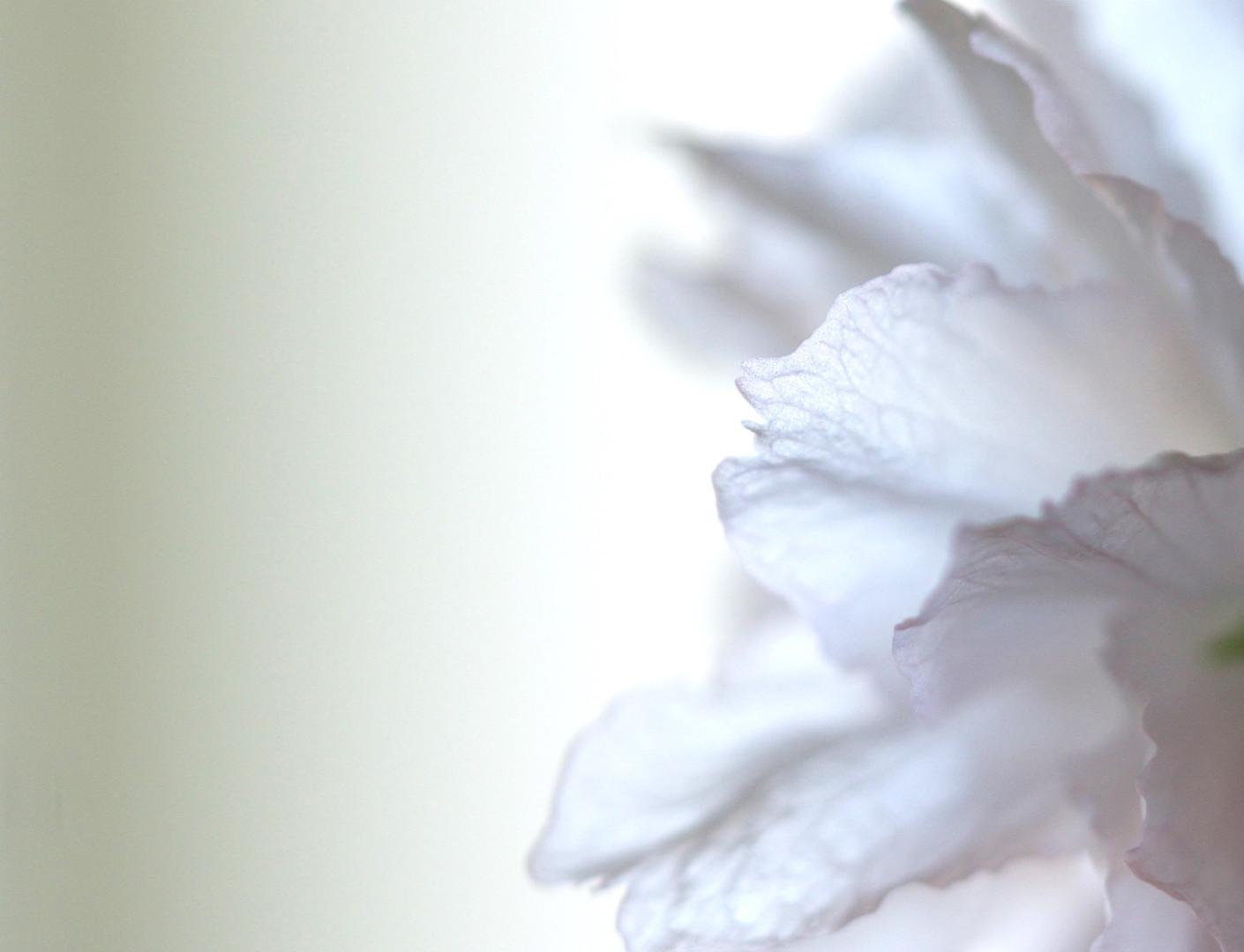 blomst%252520i%252520v_edited_edited_edi