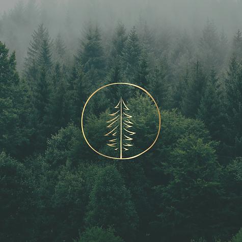 Promo Golden Pine4.png