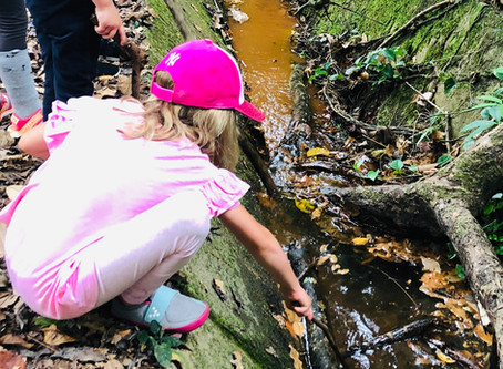 Reflection: 'All Things Bugs' Holiday Programme
