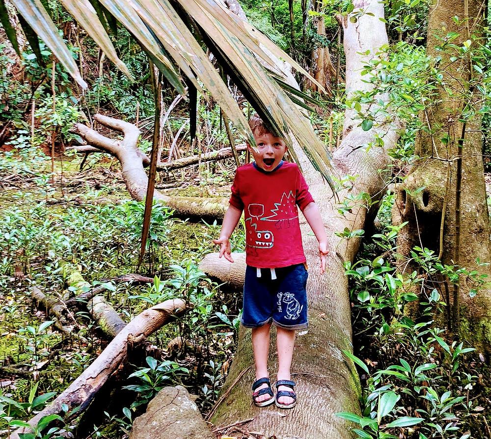 Child balancing on a fallen tree