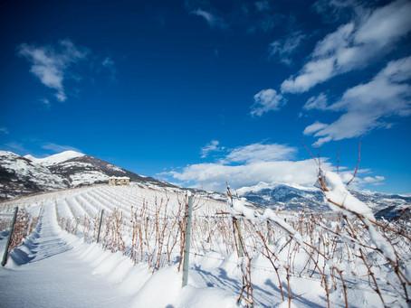 La viticoltura eroica