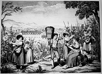 Cibo & Vino - Tra viticoltura ed enogastronomia: un viaggio nel territorio laziale