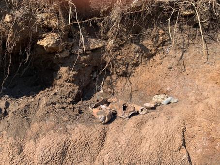 Ritrovamento di ossa sulla spiaggia di Ladispoli