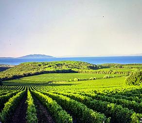 Superba Toscana