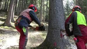 """""""Non tagliate quell'albero""""!"""