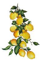 lemon print_edited-2.jpg