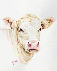 white cow for prints.jpg
