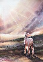 lamb saved_edited-1.jpg