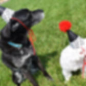 puppy-dog-party-ideas.jpg