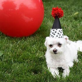 puppy-dog-birthday-party-ideas.jpg