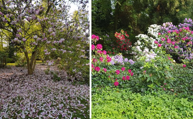 Ob Magnolie, Azalee oder Rhododrendron: zu jeder Jahreszeit blüht etwas im Bunten Garten