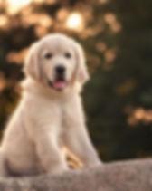 Hundefotografie - Angela Blewaska