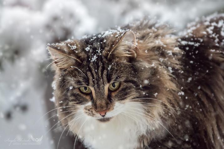 Eryn im Schnee