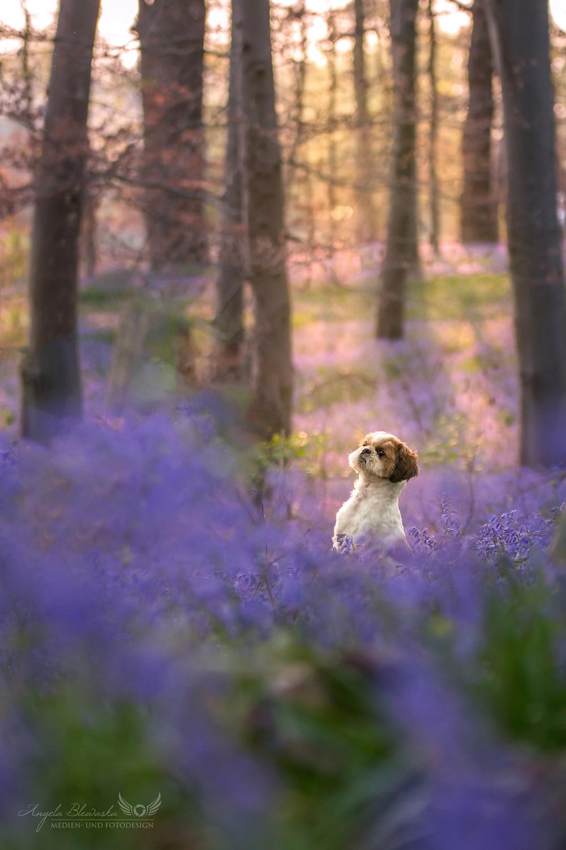 Wald der Blauen Blumen in Doveren