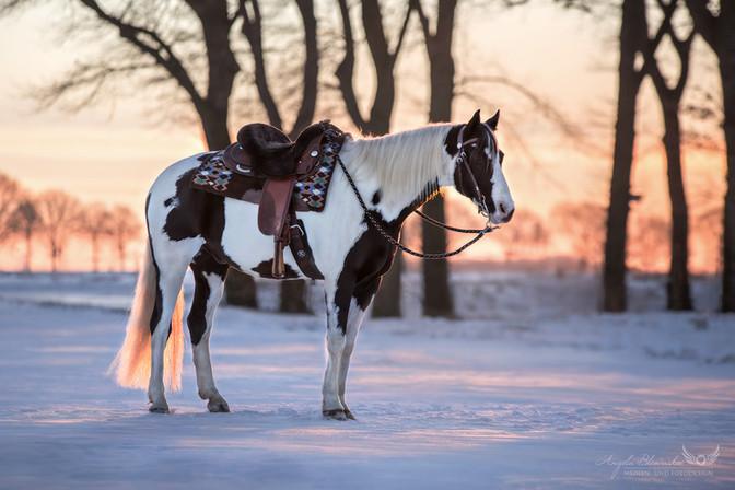 Leo - Paint Horse im Schnee