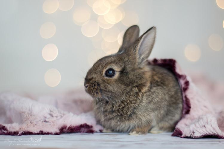 Stuart - Kaninchen