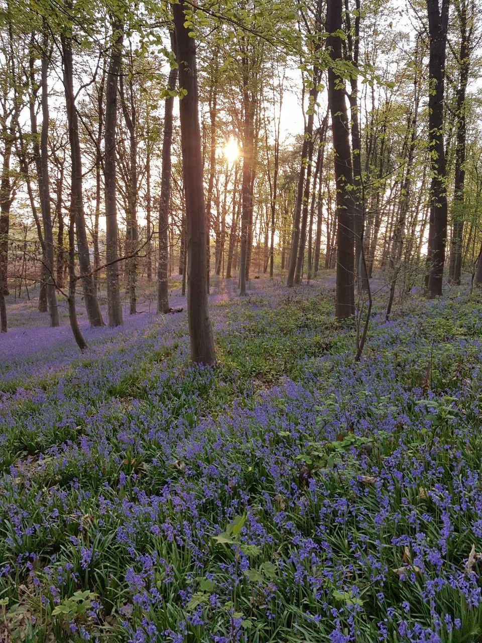 Wald der Blauen Blumen, Hückelhoven Doveren