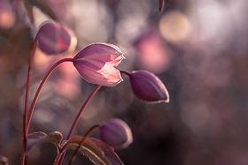 Naturfotografie - Angela Blewaska