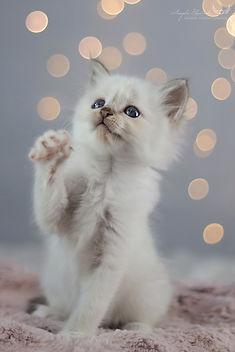 Katzenfotografie - Angela Blewaska