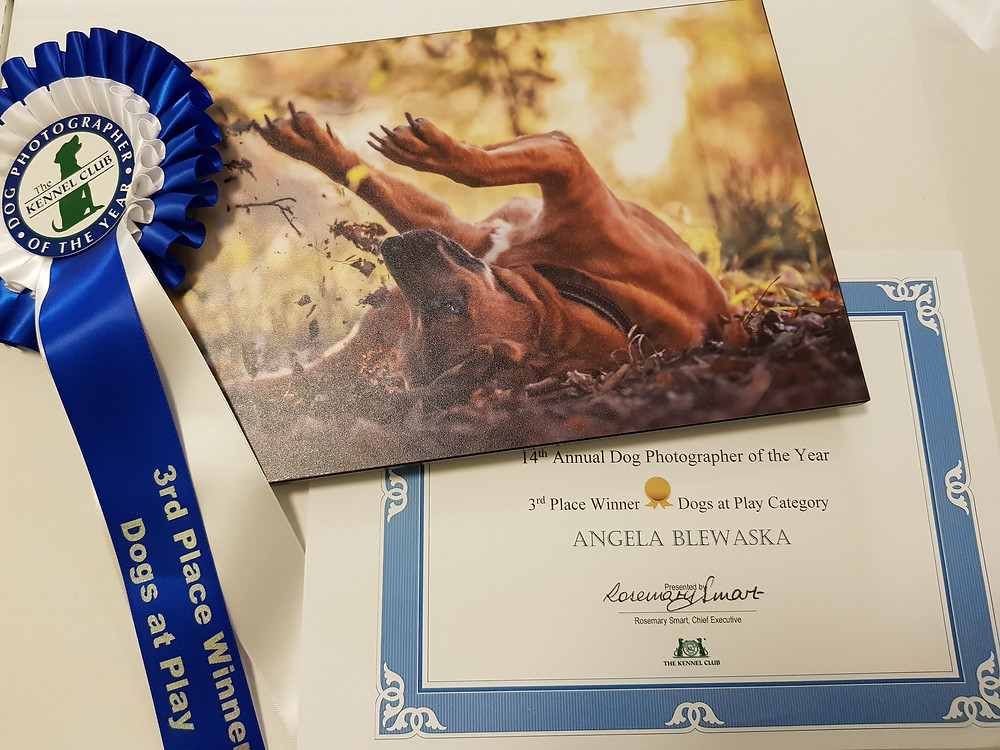 "Angela Blewaska - 3rd Place ""Dogs at Play"" Dog Photographer of the Year"