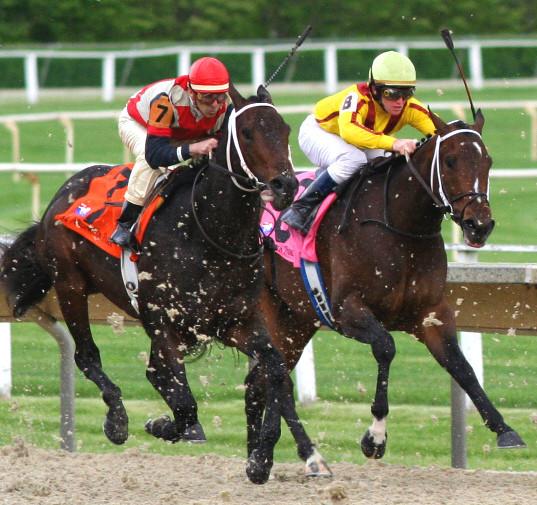 Horserace_520133030.jpg