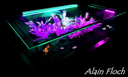 Table Basse Aquarium ou Vitrine AMBASSADOR Bois Massif LED Verre Diamant