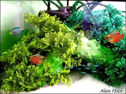 Filtre-interne-camouflé-dans-aquarium-po