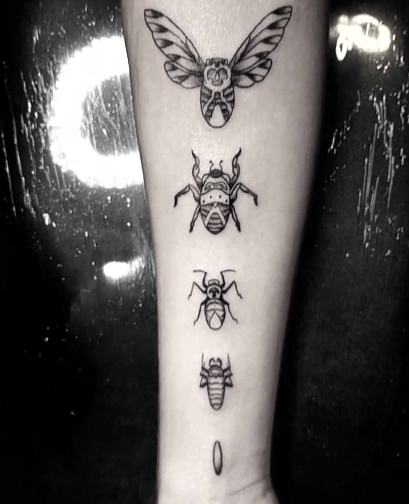 Cicada Evolution