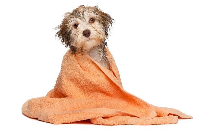 Level 1-Bathing & Brushing Fundamentals