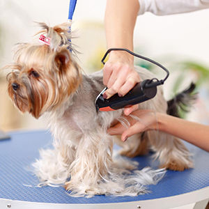 The Complete Groomer Course