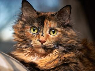 cat-pet-furry-face-162319.jpeg