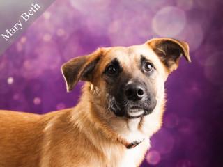 Prairie Paws dog.jpeg
