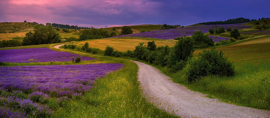 lavender-4673090_1920.jpg