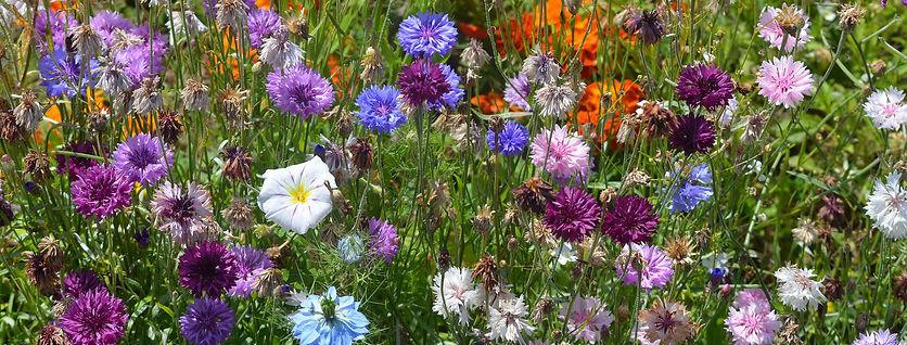 flowers-1522129_1920.jpg