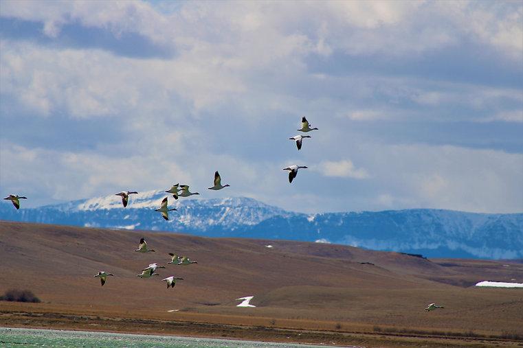 Freezeout Lake (23).JPG
