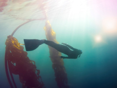 We are the eyes below the water, and the voices above it.    We freedive for conservation.