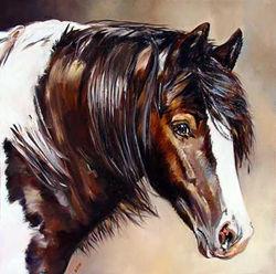 Gypsy Vänner Stallion